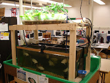 One of our first Aquaponic Systems