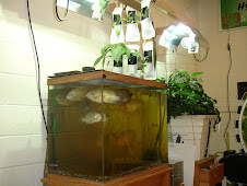 One of our early Aquaponic Systems