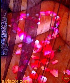 Rosas Mariposas y corazones Facebook - Las Mejores Imagenes De Rosas Y Corazones
