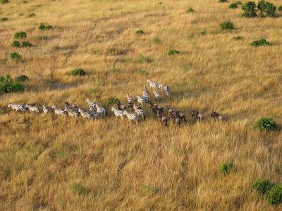 Safari Kenya: zbor cu balonul peste Masai Mara