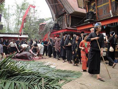 Ceremonie ingropare Sulawesi