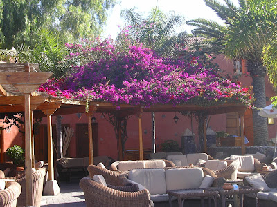 Terasa plina cu flori in Tenerife