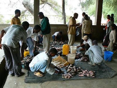Imagini Etiopia: piata de peste din Awasa