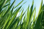Grass Seed Mat,grass seed mats, grass seed starter mats,mats grass seed,grass seed starter mat,straw mats covering grass seed,grass seed planting mat,straw mats for covering grass seed