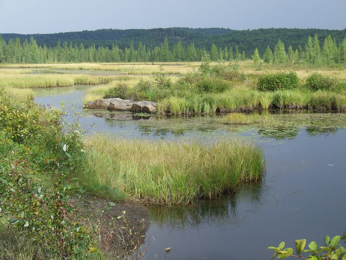 Algonquin Bog