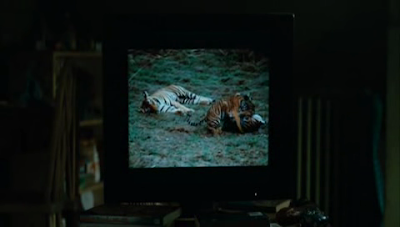 tigris knowing