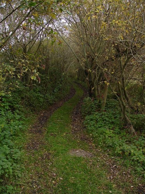 Chemin tortueux