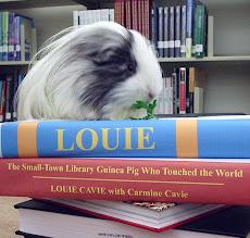 LOUIE, a small town guinea pig
