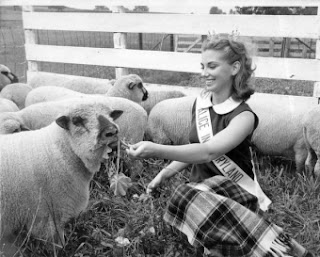 Alice in Dairyland With Sheep