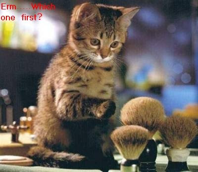 Funny animal picture:Makeuping kitten 爆笑猫咪图片:猫咪化妆