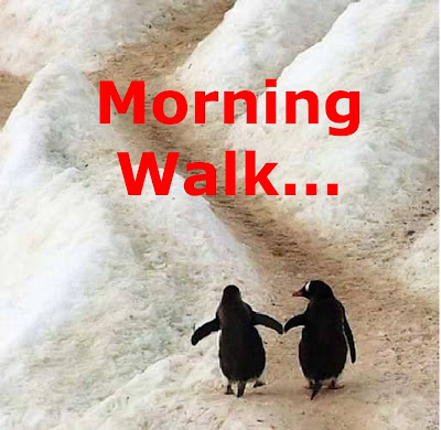Funny Penguins: Morning walk penguins