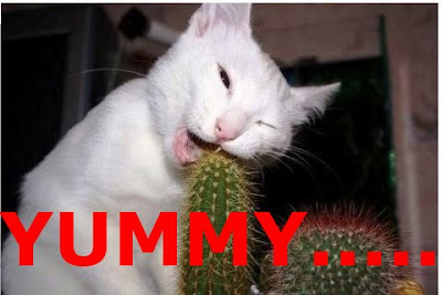 Funny Cats: Cactus Eater