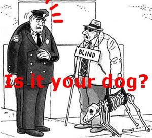 Funny dogs: bonny doggy