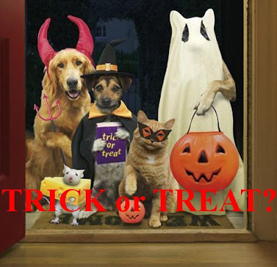 Funny animals: Trick-orTreat