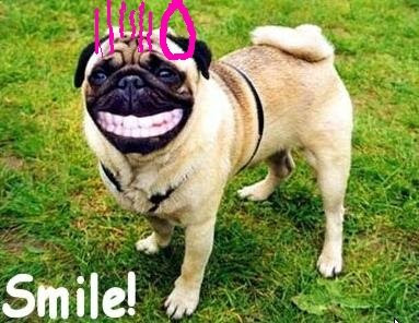 Funny dogs: A smile of sorry
