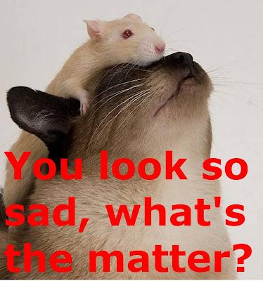 Funny Cats and Rats: Sad rat on a cat's head