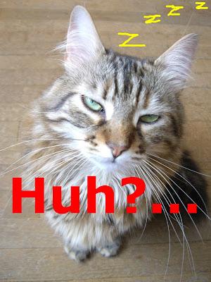 Funny Cats: Sleepy cat
