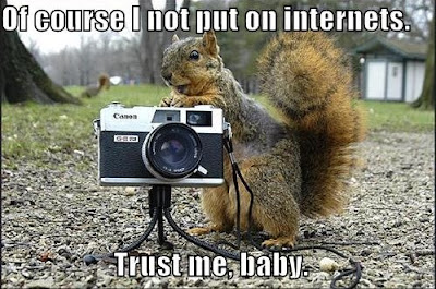 Funny Pictures: Funny squirrel taking a photo