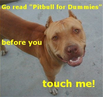 Funny Pictures: Funny pitbull