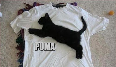 Funny Pictures: Kitty Puma logo