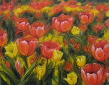 Tulip Field