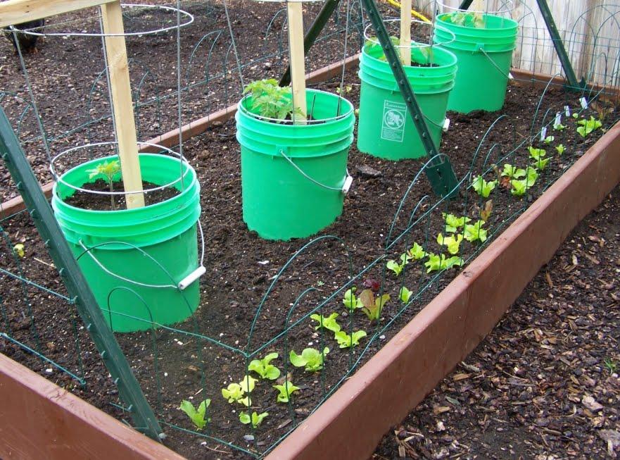 Annieu0027s Kitchen Garden