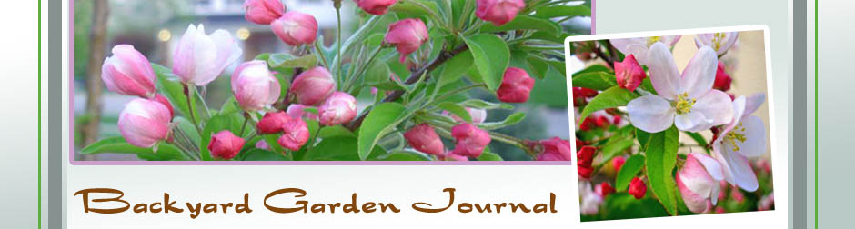 Backyard Garden Journal