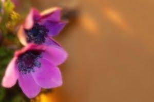 [1260791_nice_flowers.jpg]