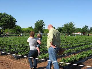 ферма органического земледелия