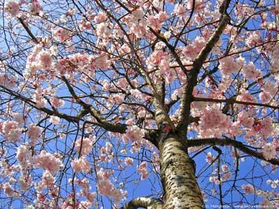 http://3.bp.blogspot.com/_Dm5qPZ9wn6s/Se3acIZ7UvI/AAAAAAAACvA/31-hoMGHhqw/s1600/printemps-arbre-fleurs-4.jpg