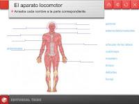 external image EL+APARATO+LOCOMOTOR.bmp
