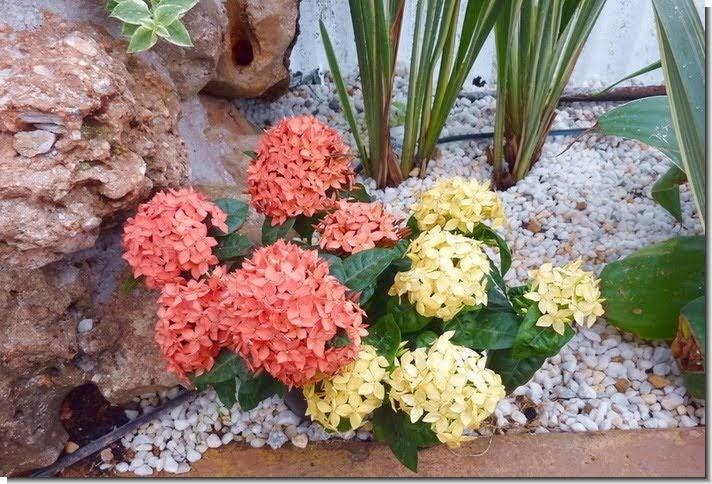 Jardines y terrazas guijarros y piedras decorativas for Disenos de jardines con piedras decorativas