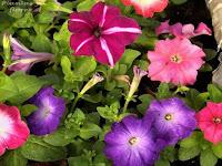 revistas de jardineria revista de jardineria jardineria poda