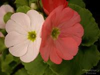 centros jardineria centros de jardineria material jardineria