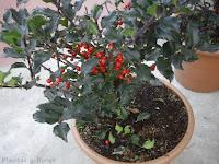 estudiar jardineria jardinerias trabajos de jardineria
