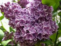 articulos jardineria diseno jardineria estudiar jardineria