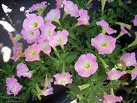 plantas decoracion decoracion exteriores fuentes decoracion