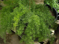 diseno jardines curso jardineria cursos de jardineria