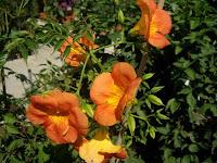 fotos jardines jardines plantas jardin