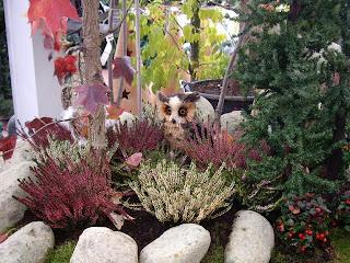 jardines 3d diseno de jardines 3d construccion jardines