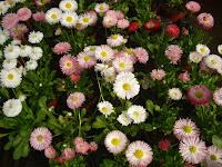 jardines planos jardines 3d diseno de jardines 3d