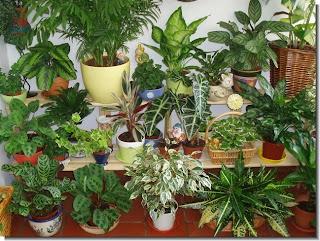 jardineria basica tiendas de jardineria tienda jardineria