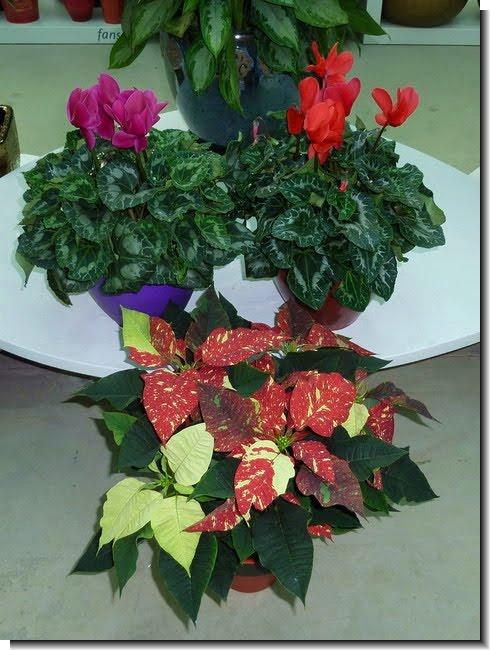 Plantas y flores las plantas y la luz - Plantas de interior que no necesitan luz ...