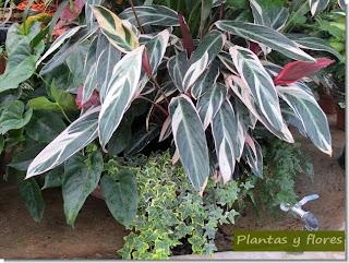 a las plantas de interior debemos prestarle atencin todos los das para que crezcan sanas y fuertes y nos hagan sentir satisfechos al mostrar su aspecto
