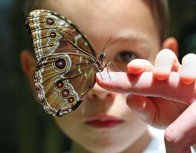 external image nino-autista-con-mariposa.jpg