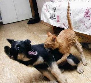 gato mordiendo a un perro
