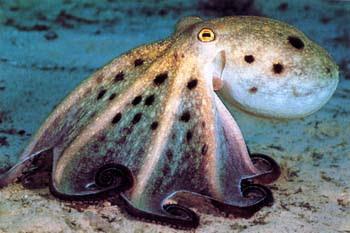 photo of Mopirl