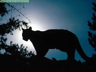 Два года с леопардом  ФОТО НОВОСТИ