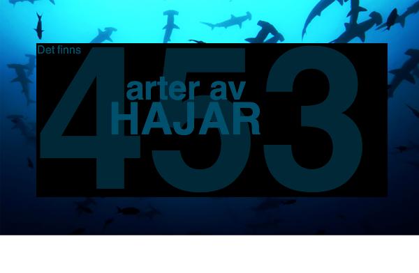 Det finns 453 arter av hajar