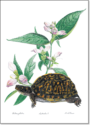 Painting: Turtlehead